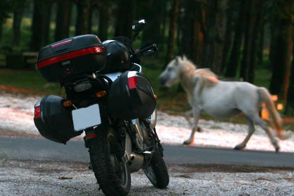 Cómo elegir las maletas más adecuadas para tu moto