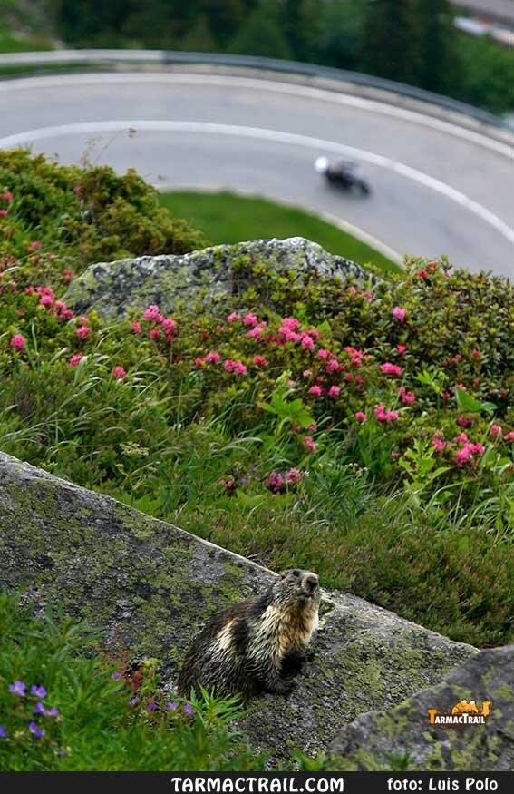 Motos Trail - La Foto del Jueves 046 10-09-2015