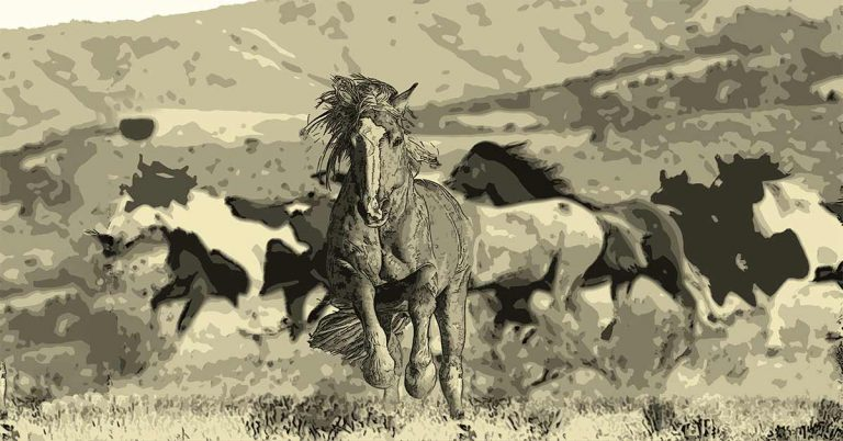 Viaje al Gran Cañón. Capítulo 1